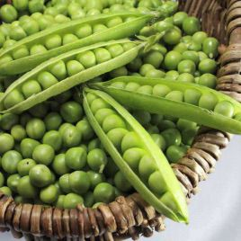 Болеро семена гороха овощного раннего до 65 дн (May Seeds)