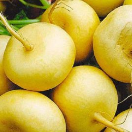 Золотой Шар семена репы (Свитязь)