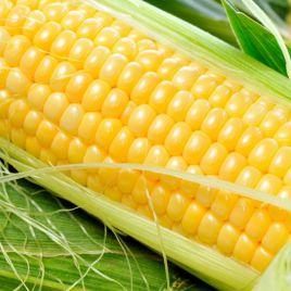 Любава F1 семена кукурузы кормовой (Польша)