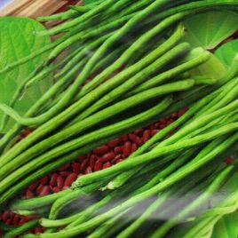 Вигна Фазэнда семена (GL Seeds)