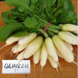 Одиссей семена редиса белого (Гавриш)