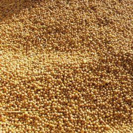 Аннушка семена сои (Украина)