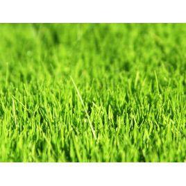 Гольф семена газонной травы (Коуел)