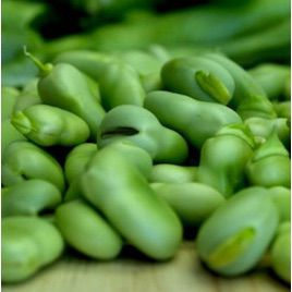 Дольче семена боба овощного (Anseme)