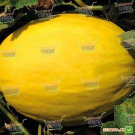 Бабор F1 семена дыни тип Желтая канарская ранней 2,5-3 кг овал. (Clause)
