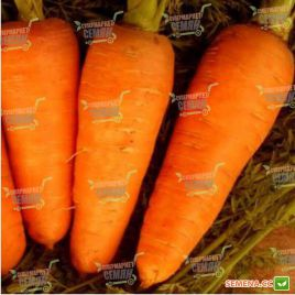 Болтекс семена моркови Шантане среднепоздней 110-120 дн. (Clause)