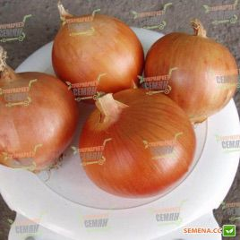 Испаньол семена лука репчатого среднеспелый 110-115 дн 140-160 гр (Clause)