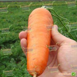 Шантане семена моркови Шантане (Clause)