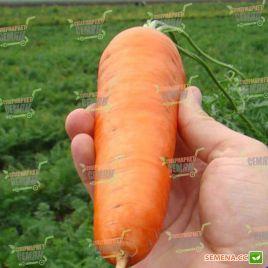 Шантане семена моркови Шантане среднепоздней 110-120 дн. (Clause)