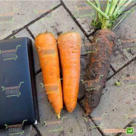 Скарла семена моркови Флакке (Tezier/Clause)