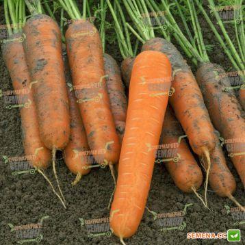 Стромболи F1 семена моркови Нантес (Clause)