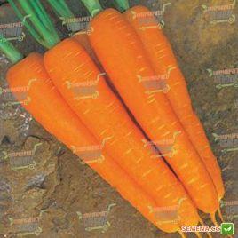 Стромболи F1 семена моркови Нантес поздней 120 дн. (Clause)