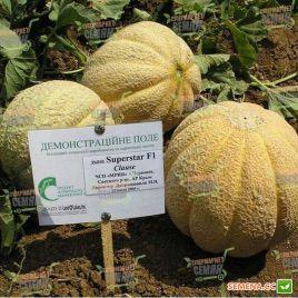 Суперстар F1 семена дыни тип Итальянская сетчатая (Clause)