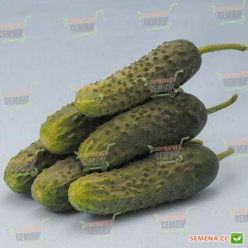 Міміно F1 насіння огірка партенокарп. (Lucky Seed )