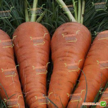 Санта Круз F1 семена моркови Шантане (Seminis)