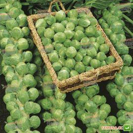 Абакус F1 семена капусты брюссельской среднеспелой (Syngenta)