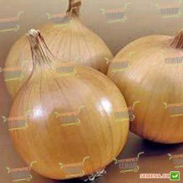 Братко F1 семена лука репчатого позднего 115-120 дн (Syngenta)
