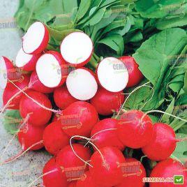Каспар F1 семена редиса 18-20 дн. (Syngenta)