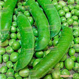 Ламбадо семена гороха овощного раннего до 60 дн (Syngenta)