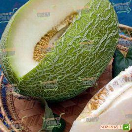 Ман F1 семена дыни тип Ананас раннеспелой 68-70 дн. 2,5-3 кг овал. (Syngenta)