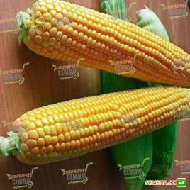 Оверленд F1 семена кукурузы суперсладкой Sh2 84дн. 20см 18-20р. (Syngenta)