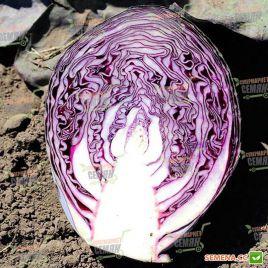 Рескью F1 семена капусты к/к поздней (Syngenta)