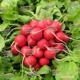Сора семена редиса 20-22 дн. (Bayer Nunhems)