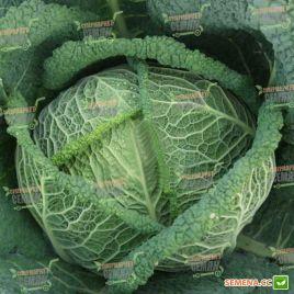 Вироса F1 семена капусты савойской поздней 137дн 2-3кг (Bejo)