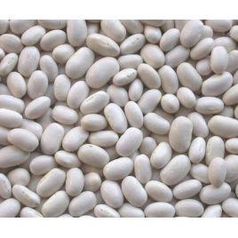 Біла овочева насіння квасолі (Euroseed)