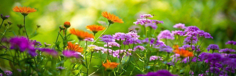 Каталог квітів
