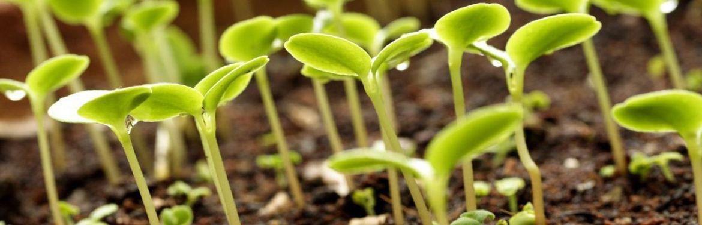 Каталог агрохимии и средств защиты растений
