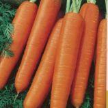 Карлена семена моркови (SX)