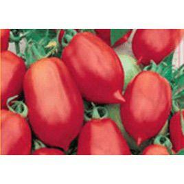 Далида семена томата дет. с носиком среднего слив. 115-120 гр. (Satimex СДБ)