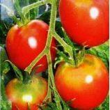 Де барао розовый семена томата индет розового (Элитный ряд)