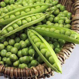 Болеро семена гороха овощного (May Seeds)