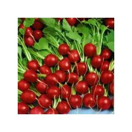 Кругла Скарлет семена редиса 28-42 дн. (Servise plus (GSN)