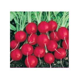Черри Белл семена редиса 25-30 дн. (Servise plus (GSN)