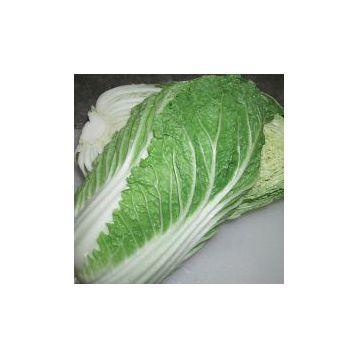 Микадо F1 семена капусты пекинской ранней 50 дн. 1,5 кг (Satimex СДБ) НЕТ ТОВАРА