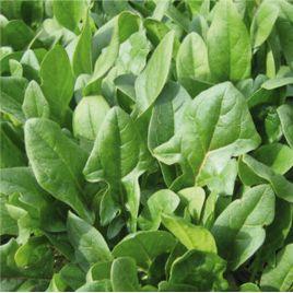 Матадор семена шпината (Гавриш) СНЯТО С ПРОИЗВОДСТВА