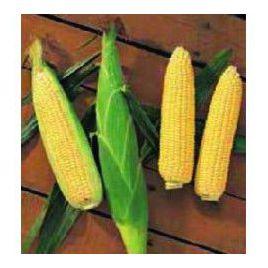 Растлер F1 семена кукурузы суперсладкой Sh2 средней 84дн. 19,5см 16-18р. (Harris Moran)