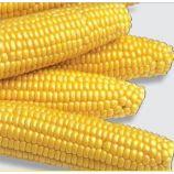 Мегатон F1 насіння кукурудзи суперсолодкої Sh2 (Harris Moran)