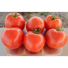 INX 1579 F1 семена томата дет. окр. 180-230г (Innova Seeds)