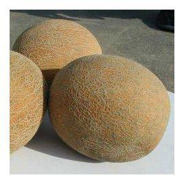 Ананас семена дыни средней 80 дн. 2-2,5 кг овал. (Servise plus (GSN) СДБ)