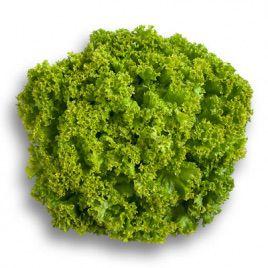 семена салата листового лолло бионда