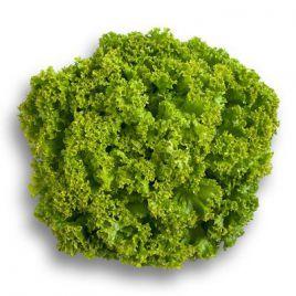 Лолло Бионда семена салата листового зеленого (Гавриш) НЕТ СЕМЯН