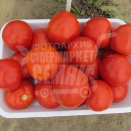 Ламантин F1 семена томата дет. (Bayer Nunhems)