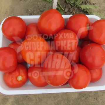Ламантин F1 семена томата дет. среднего 100-110 дн. окр. 160-210 гр. красный (Nunhems)