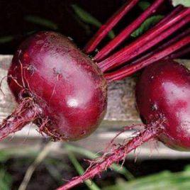 Бордо семена свеклы столовой (Rem seeds)