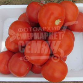 Майсалун F1 семена томата дет. среднепозднего 105-115 дн. окр. 200-250 гр. (Bayer Nunhems)