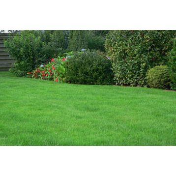 Газонна трава Регенерационная (Свитязь)